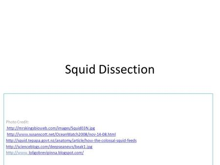 Squid Dissection Photo Credit: