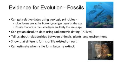 Evidence for Evolution - Fossils Can get relative dates using geologic principles - older layers are at the bottom, younger layers at the top Fossils that.