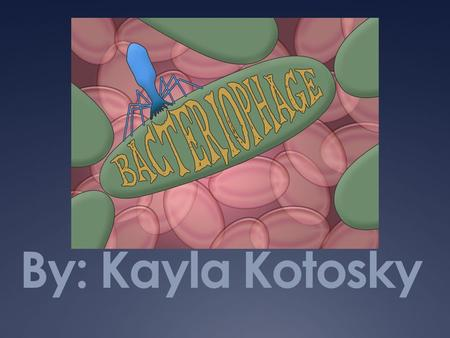 By: Kayla Kotosky. Intro to Bacteriophage  Virus that infects bacteria  Reproduce by attaching to the outer surface of bacteria. Then inject viral genome.