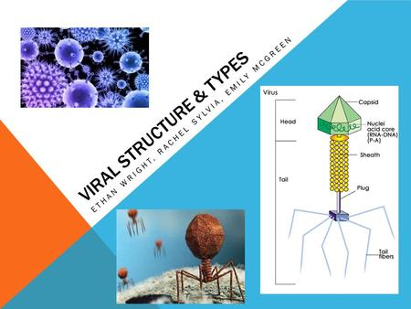 VIRAL STRUCTURE & TYPES ETHAN WRIGHT, RACHEL SYLVIA, EMILY MCGREEN.