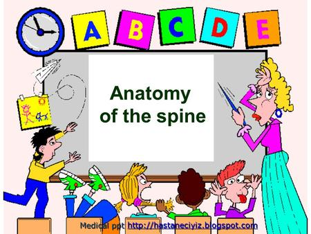 Anatomy of the spine Medical ppt Medical ppt