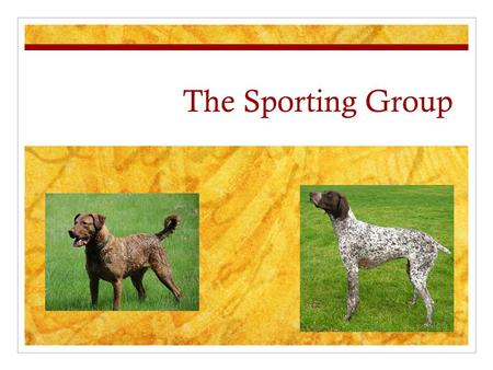 The Sporting Group. History Descendants of dogs bred to work WITH human hunters. Specific breeds were designed to do specific tasks Locate Flush Retrieve.
