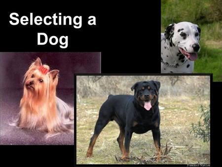 Selecting a Dog. Student Learning Objective List factors to consider when selecting a dog.