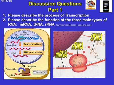 11/7/14 Discussion Questions Part 1 1. Please describe the process of Transcription 2. Please describe the function of the three main types of RNA: mRNA,