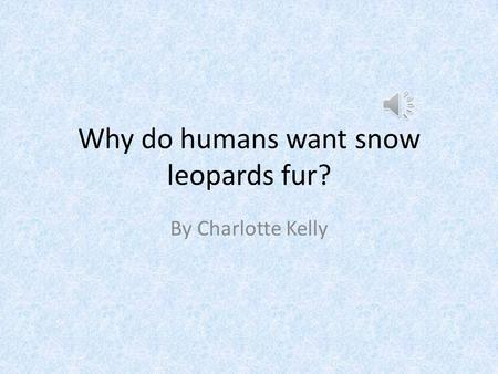 Why do humans want snow leopards fur? By Charlotte Kelly.