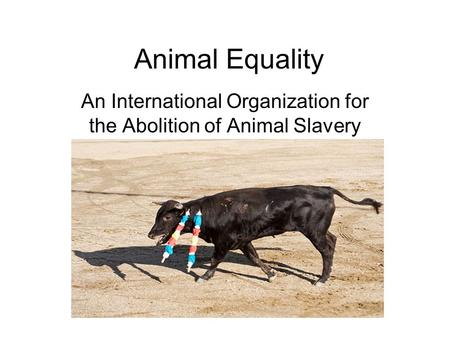 Animal Equality An International Organization for the Abolition of Animal Slavery.