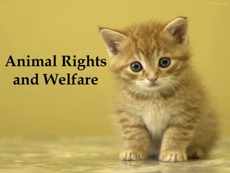 Animal Rights and Welfare. Animal Rights Animal rights, also referred to as animal liberation, is the idea that the most basic interests of animals should.