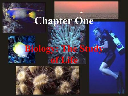 Chapter One Biology: The Study of Life. I. Biology is the study of Life.