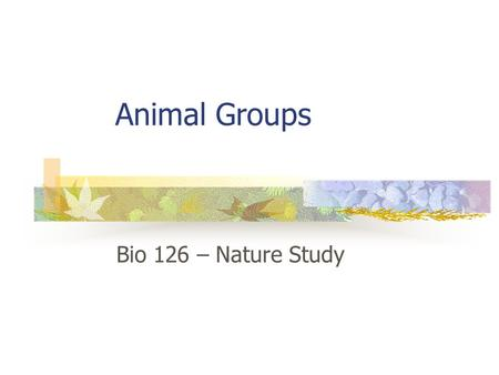 Animal Groups Bio 126 – Nature Study. Sponges Filter feeders Simplest animals No muscles, no nerves,brain Very flat, small in cool California waters Sessile.