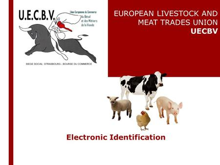 Electronic Identification EUROPEAN LIVESTOCK AND MEAT TRADES UNION UECBV.
