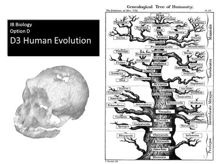 IB Biology Option D D3 Human Evolution IB Biology Option D D3 Human Evolution 1.