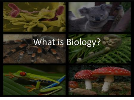 What is Biology?. Biology- natural science concerned with the study of life and living organisms – Fundamental concepts of modern biology 1. Cells are.