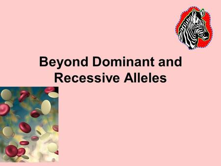Beyond Dominant and Recessive Alleles. Incomplete Dominance: when neither allele is completely dominant over the other. · Results in the heterozygous.