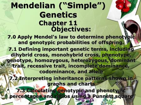 "Mendelian (""Simple"") Genetics Chapter 11 Objectives: 7.0 Apply Mendel's law to determine phenotypic and genotypic probabilities of offspring. 7.1 Defining."