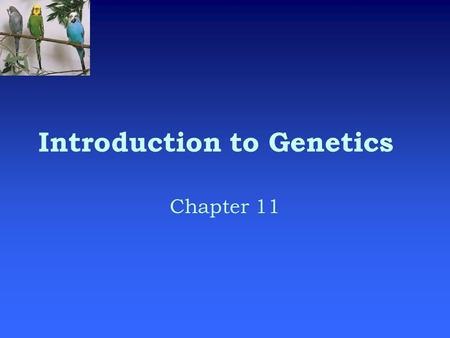 Introduction to Genetics Chapter 11. What is genetics?  Genetics is the scientific study of heredity.