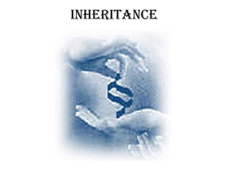 Inheritance Chapter 7. Inheritance: the way genes are passed down. If a father doesn't have a leg does that mean his children will be born with out a.