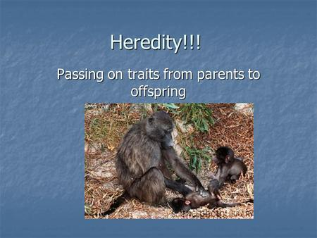 Heredity!!! Passing on traits from parents to offspring.