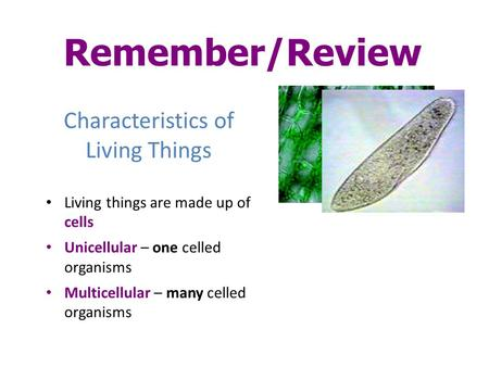 Characteristics of Living Things Living things are made up of cells Unicellular – one celled organisms Multicellular – many celled organisms Remember/Review.