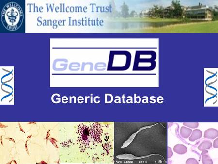 Generic Database. What should a genome database do? Search Browse Collect Download results Multiple format Genome Browser Information Genomic Proteomic.