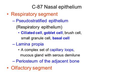C-87 Nasal epithelium Respiratory segment –Pseudostratified epithelium (Respiratory epithelium) Ciliated cell, goblet cell, brush cell, small granule cell,