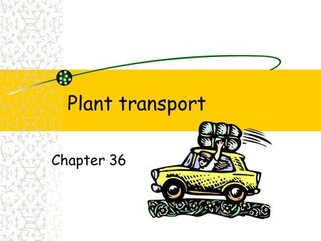 Plant transport Chapter 36. Plant transport Evolutionary changes Roots, Leaves, Stems Water Carbohydrates Minerals Light energy CO 2 O2O2.