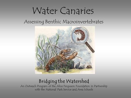 Bridging the Watershed An Outreach Program of the Alice Ferguson Foundation in Partnership with the National Park Service and Area Schools Water Canaries.