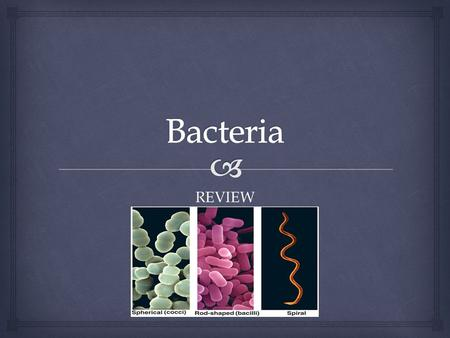 REVIEW.   Bacteria are single-celled organisms  Are present in air, water and on most solid materials  Bacterial cells are very small and can only.