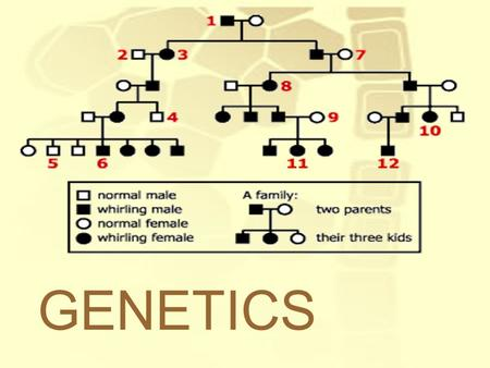 GENETICS. Genetics: The study of how traits encoded in our DNA are passed on. Used to predict the possible outcomes of a genetic cross –Depends on probability.