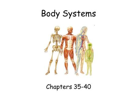 Body Systems Chapters 35-40. 35.1 Organization of the Body Nervous System –Structures: Brain Spinal cord Peripheral nerves –Function: Recognizes & responds.