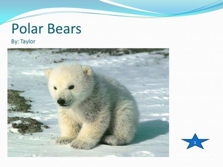 Polar Bears By: Taylor 1. Table of contents Intro…………………………………………………. Page 3 Live……………………………………………………Page 4-5 Feature………………………………………………Page 6-9 Food…………………………………………………..Page.