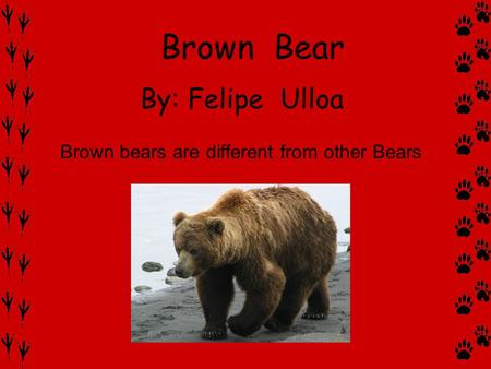 By: Felipe Ulloa Brown bears are different from other Bears Brown Bear.