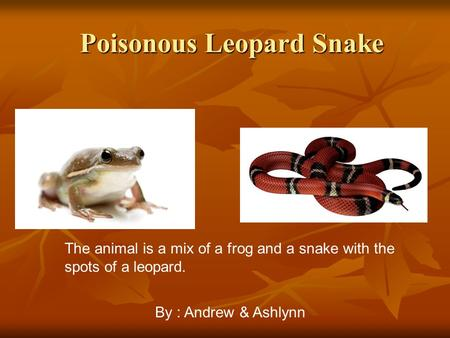 Poisonous Leopard Snake Poisonous Leopard Snake The animal is a mix of a frog and a snake with the spots of a leopard. By : Andrew & Ashlynn.