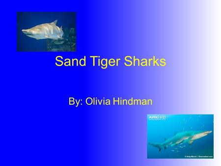 Sand Tiger Sharks By: Olivia Hindman.