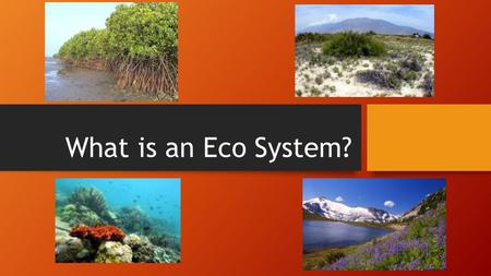 What is an Eco System?. (You will be able to answer this question by the end of this lesson) Abiotic Vs. Biotic Basic Needs of Biotic Components Biological.