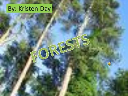 By: Kristen Day Forest Resources Many products are made from the flowers, fruits, seeds, and other parts of forest plants. Products can come from both.