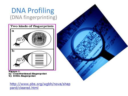 DNA Profiling (DNA fingerprinting)  pard/cleared.html.