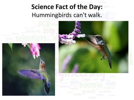 Science Fact of the Day: Hummingbirds can't walk..