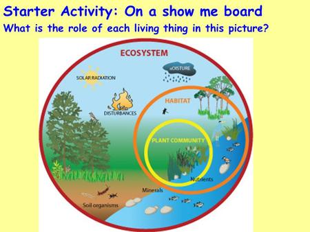 Starter Activity: On a show me board What is the role of each living thing in this picture?
