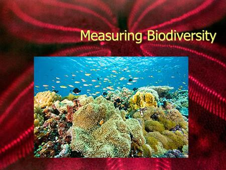 Measuring Biodiversity Biodiversity The number and variety of life forms found within a specific region. In order for biodiversity to remain high, diverse.