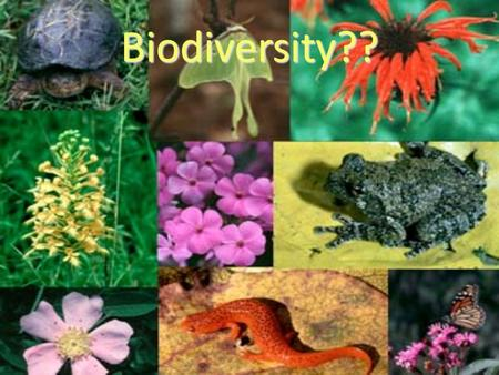 Biodiversity??. Ecosystem An environment that includes all the biotic organisms (living things, like plants, animals, and bacteria) and the abiotic factors.
