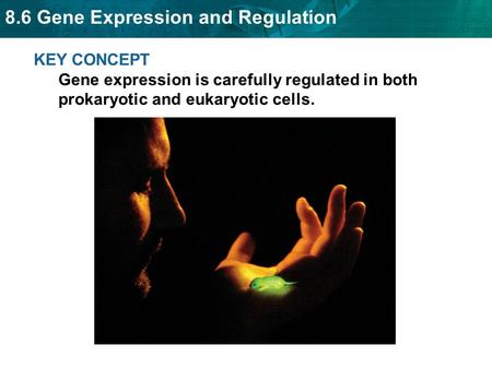 8.6 Gene Expression and Regulation KEY CONCEPT Gene expression is carefully regulated in both prokaryotic and eukaryotic cells.