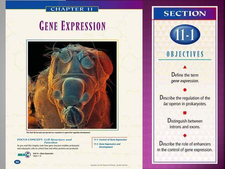 ROLE OF GENE EXPRESSION:  Activation of a gene that results in a protein  Cells DO NOT need to produce proteins for every code. GENOME:  Complete genetic.