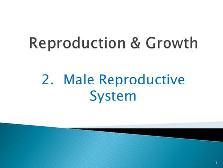 2.Male Reproductive System 1. Boys have different sex organs than girls 2 In boys, the sex organs are 2 testes.