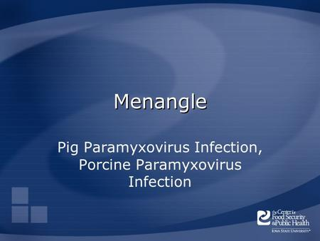 Menangle Pig Paramyxovirus Infection, Porcine Paramyxovirus Infection.