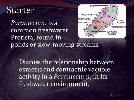 Starter Paramecium is a common freshwater Protista, found in ponds or slow-moving streams. 1. Discuss the relationship between osmosis and contractile.