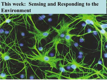 This week: Sensing and Responding to the Environment.