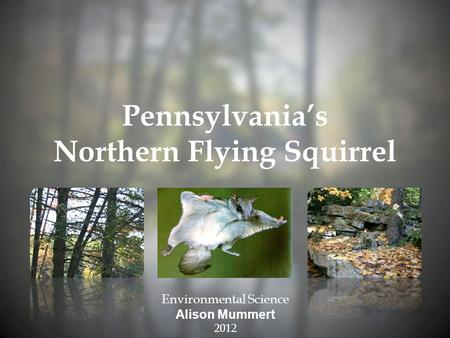 Pennsylvania's Northern Flying Squirrel Environmental Science Alison Mummert 2012.