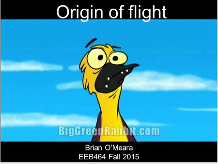 Origin of flight Brian O'Meara EEB464 Fall 2015. Convergent evolution of a complex trait Dinosaurs (birds) Insects Pterosaurs Bats.