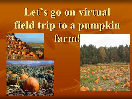 Let's go on virtual field trip to a pumpkin farm!.