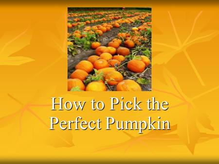 How to Pick the Perfect Pumpkin. Today my Aunt Kate and I are going to the pumpkin patch to pick the perfect pumpkin.